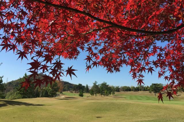 ★2/25(日)に(神戸・吉川IC)ロータリーゴルフ倶楽部にて開催される【関西地区予選会】第8回USAハワイホノルルパールジュニアオープン(PJO) 日本代表選抜の受付を開始しました。 イメージ8
